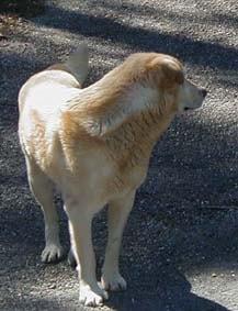 星旅馆的狗